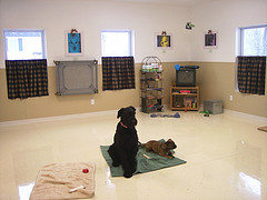 dog training room (west view)