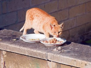 cat-behavior