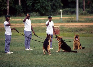 Dog handlers and trained dogs