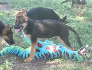grassdogs