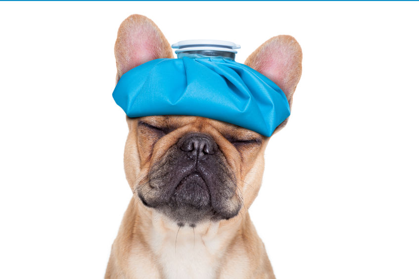Can You Give Your Dog The Flu